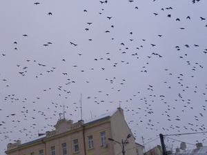 Як зробити годівницю для птахів? Фото